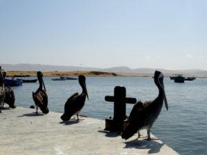 Lagunilla Paracas déjeuner avec les pélicans