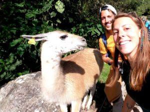 lama selfie Machu Picchu