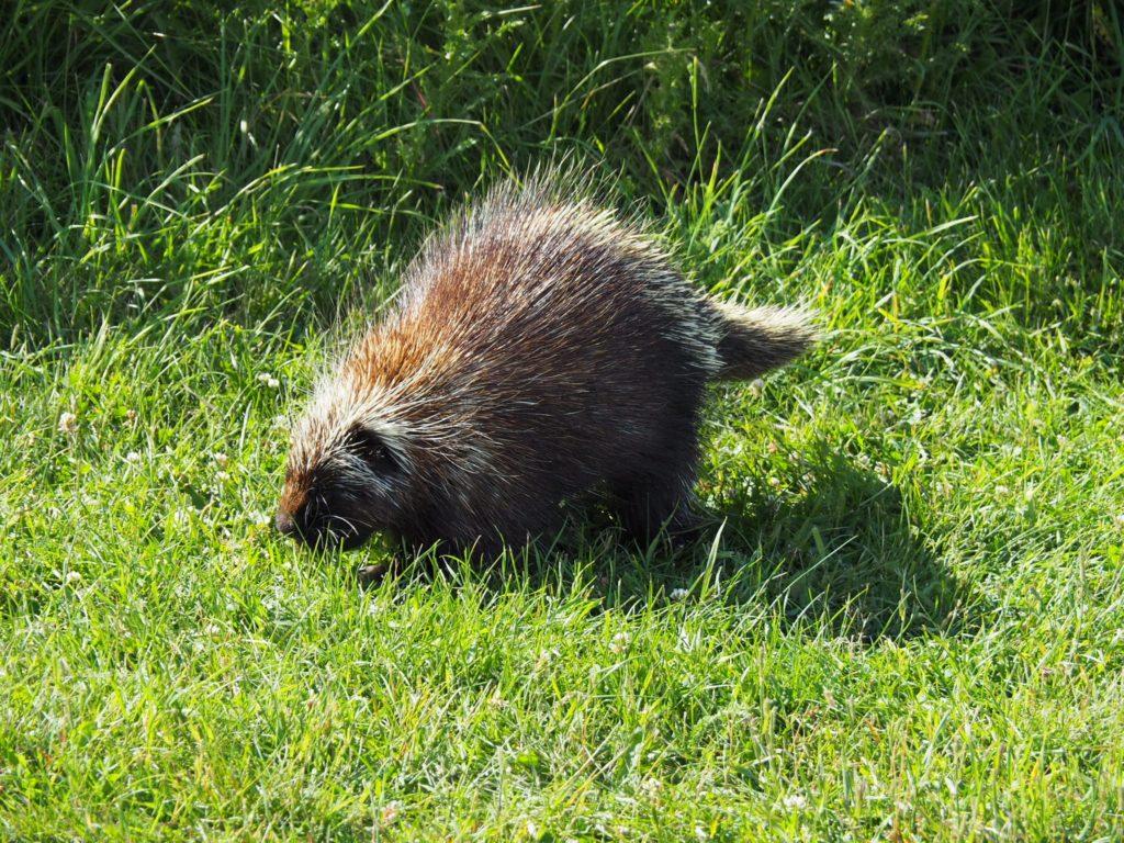 Forillon National Parc